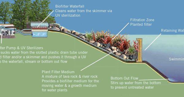 Diagram Of A Natural Pool Natural Swimming Ponds Pinterest