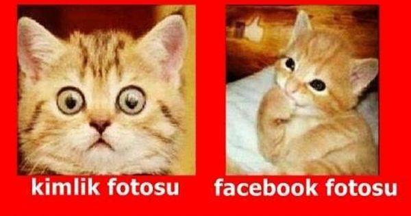 Profil Fotosu Komik Seyler Komik Kedi Esprileri