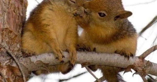 Squirrel kiss meme - photo#29