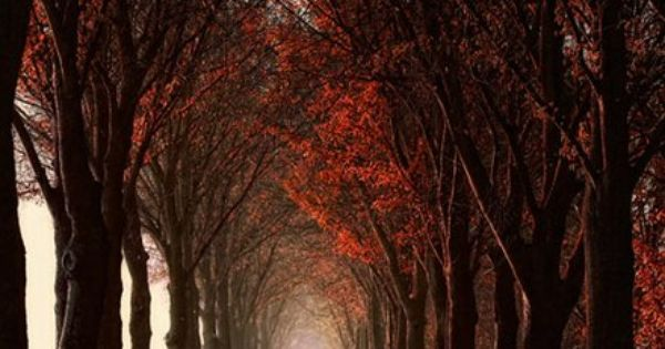 Fall with the light at the end of the tree tunnel. www.facebook.com/loveswish