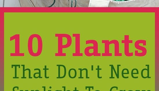10 Plants That Don 39 T Need Sunlight To Grow Gardens