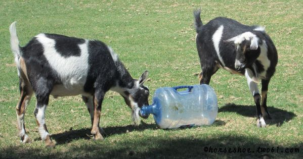 Diy Toys For Goats And Horses A Farmer S Life For Me