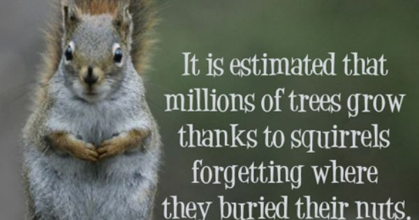 Image result for squirrels forget where nuts buried