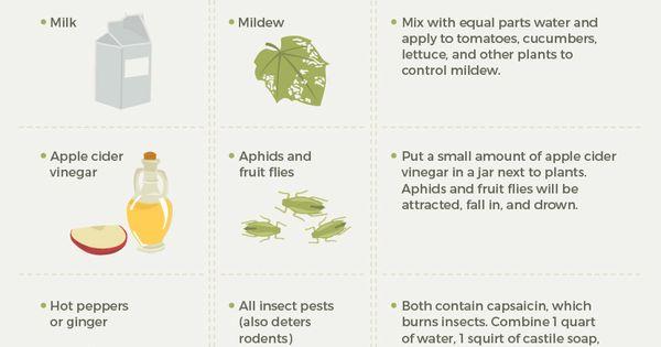 Kitchen Remedies For Garden Pests Fwx Gardening