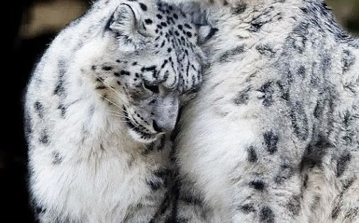 I love cats: BIG CATS, little cats, teeny cats, spotted, stripped, or