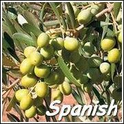 Arbosana Olive Tree Olive Trees For Sale Arbequina Olive Tree Olive Tree