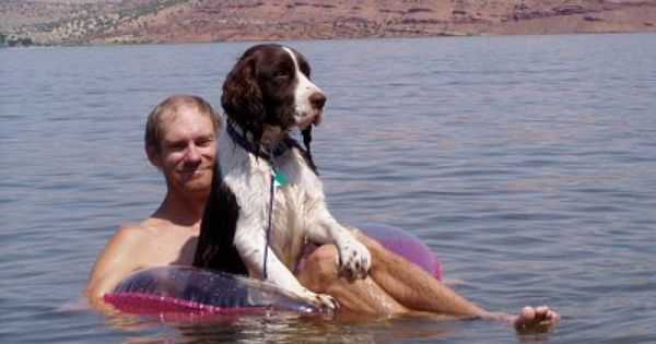 Just Another Day At The Lake English Springer Spaniel Springer Spaniel English Springer Spaniel English Springer