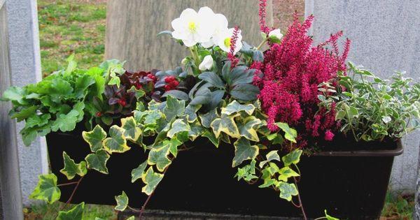 bepflanzter blumenkasten winter balkonk sten u balkon pinterest winter blumenk sten und. Black Bedroom Furniture Sets. Home Design Ideas