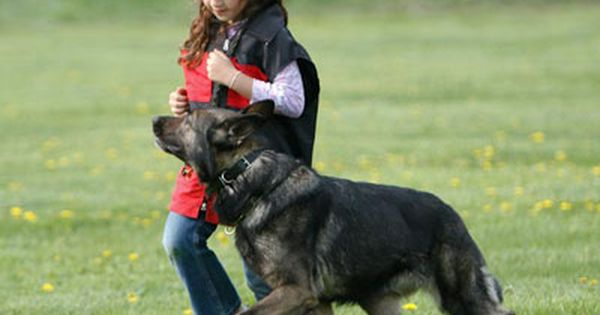 Image Detail For Floyd S Youth Schutzhund Summer Camp Investing