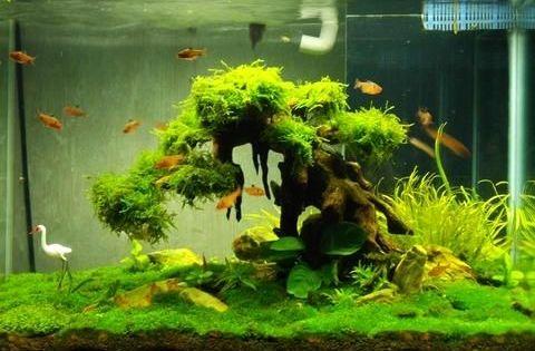 Bonsai Driftwood The Precious Jewel Of Your Aquascape Aquarium Driftwood Fish Tank Plants Fresh Water Fish Tank