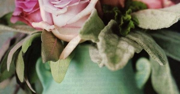 lambs ear and roses - Country Home