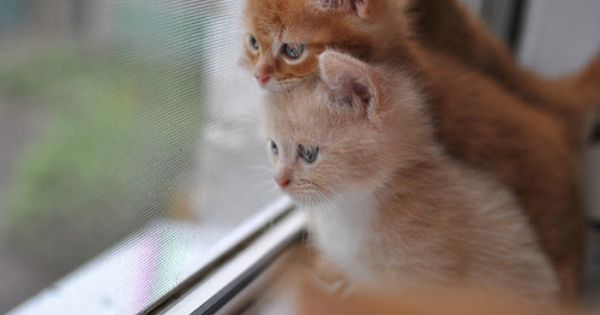 Cute Kittens 20 Great Pictures Kitty Bloger We Heart It Kittens Cutest Kittens Cute Animals
