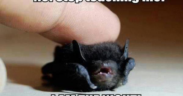 Funny Animal Pictures With Captions, He is so tiny :) SO CUTE