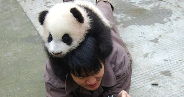 Sir, there is a panda on your head. I am jealous. 33