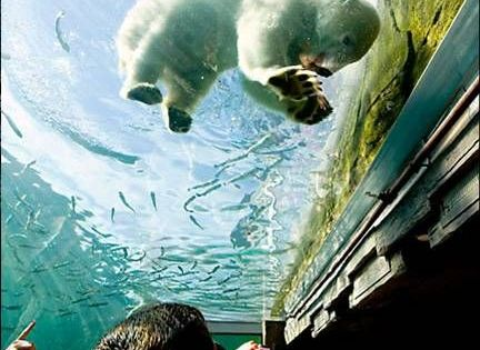 17 Most Beautiful Places To Visit In Ohio Polar Bear Aquariums And Underwater