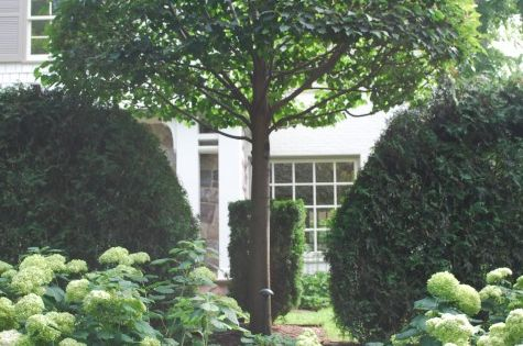 Annabelle hydrangeas in front of taxus viridis hedges and linden trees deborah silver buxus - Bassin tuin ontwerp ...