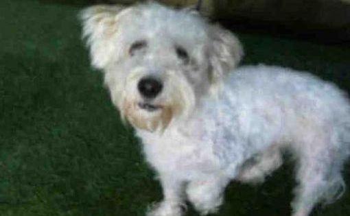 Orlando Fl Maltese Meet Toby A Dog For Adoption Pets Kitten Adoption