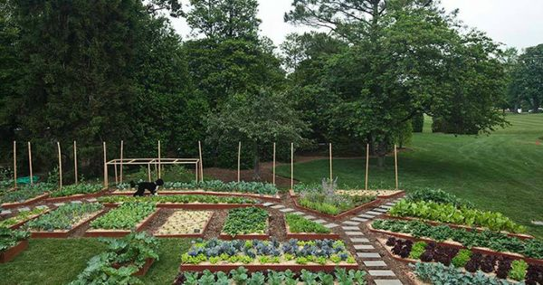 10 Garden Ideas To Steal From Michelle Obama By Michelle Slatalla Obama White House Vegetable