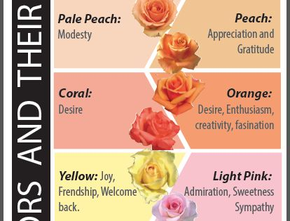 Rose colors and their meanings you wouldn t want to give for What color is the friendship rose