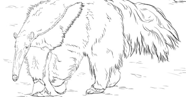 Giant Anteater Coloring Page Coloring Pages Giant Anteater