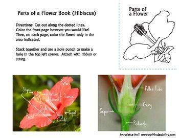 Parts Of A Flower Parts Of A Flower Flowers Hibiscus Flowers