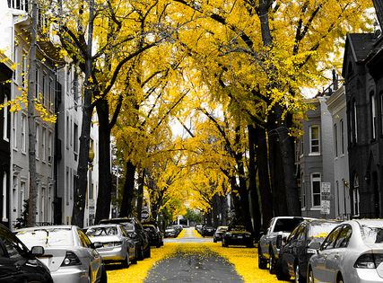 urban street scene in yellow
