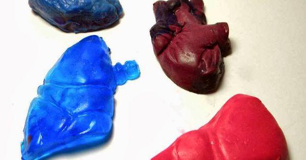 رائع شرح جسم الإنسان للطفل الهيكل العظمى و القفص الصدرى و المخ و الجهاز الهضمى بالصور والفيديو Projects To Try Stuffed Peppers Projects