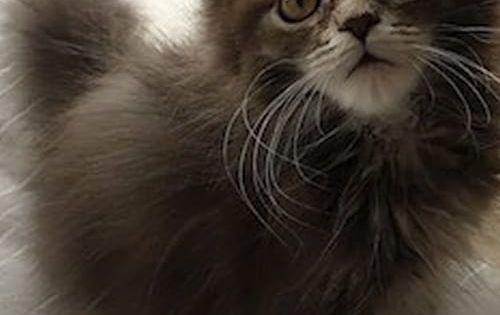 Pin On Kocky Foto Cats Foto