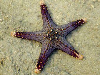Pin On Sea Stars