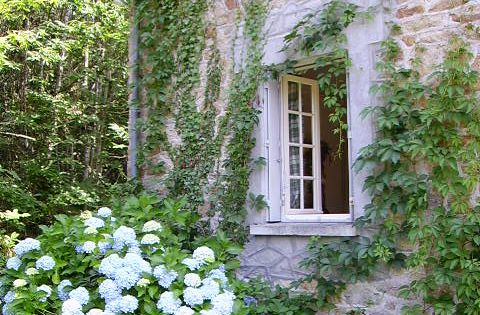 Stone home with great windows, shutters and ivy. Love Hydrangeas