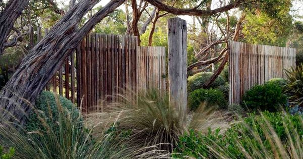 dry garden with grasses  clipped shrubs  windswept trees  open wood fence