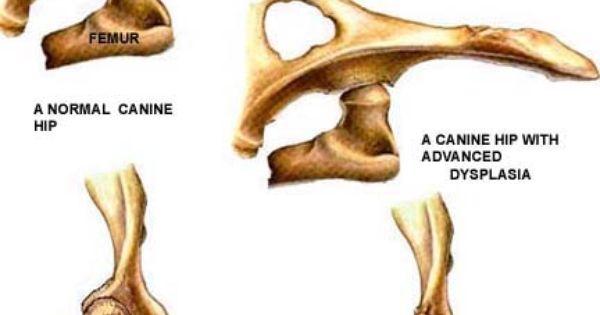 Can I Give My Dog Baby Aspirin For Hip Pain