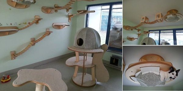 Lovely Cat Room Design Cat Room Cat Playground Cat Wall Furniture