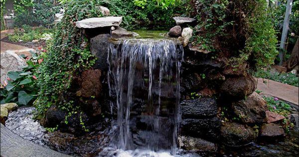 Waterfall from a living trees trunk going into a pond google search front yard corner pond - Corner pond ideas ...