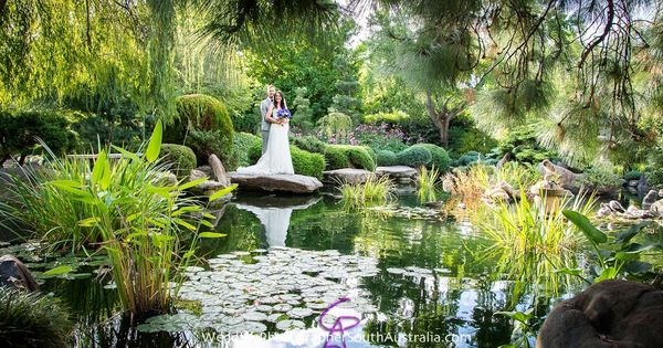 Japanese garden wedding adelaide south tce www for Garden trees adelaide