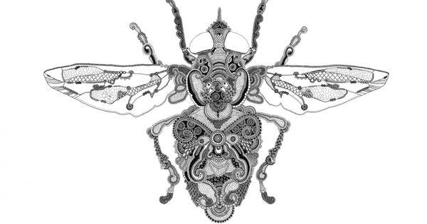 Rosalind monks Insect 4