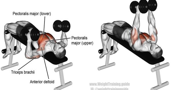 Decline Hammer Grip Dumbbell Bench Press Exercise | Training | Pinterest |  Exercises, Workout And Chest Workouts