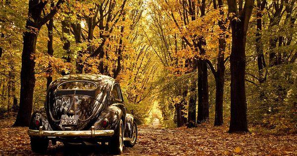 Yahoo Login Autumn Photography Vw Beetles Beetle