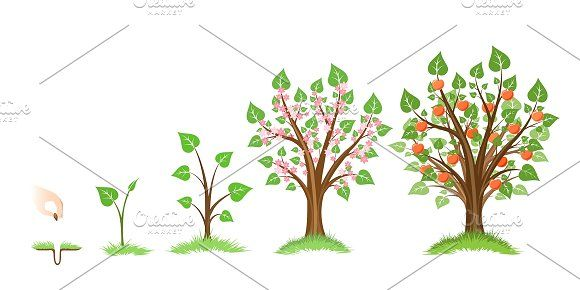 Apple Tree Growth Cycle Tree Growth Tree Illustration Plant Sketches