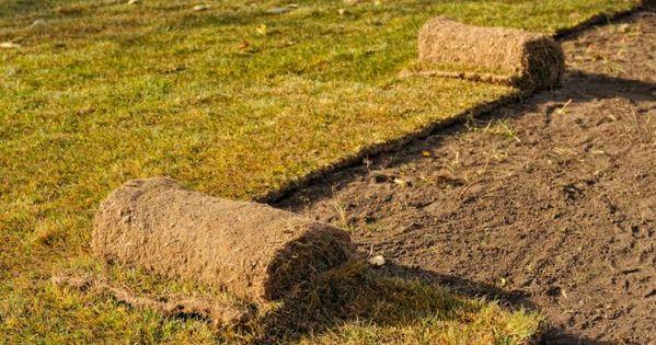 Rasen Erneuern Der Grosse Ratgeber Rasen Entfernen Rasen Erneuern Rasen