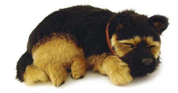 German Shepherd Sleeping Pet Pets