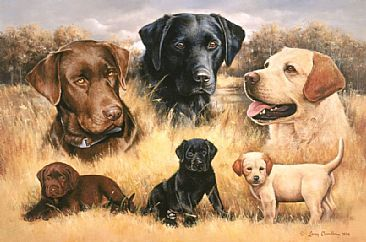 All Three Labs When Rascals Become Legends Black Labrador