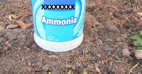 how to keep slugs away from hosta plants
