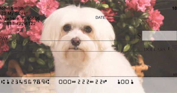 Check Out Some Of The Maltese Personal Checks From These Vendors