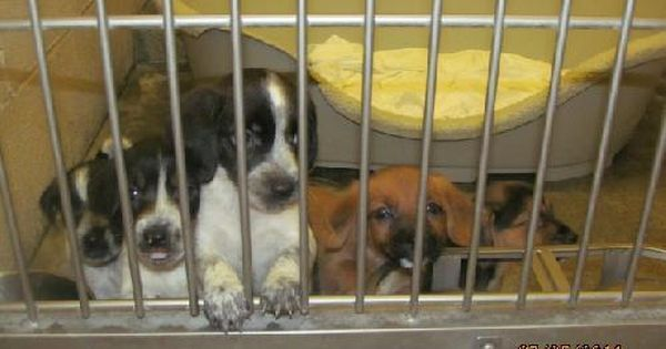 Pin By Marlies Johnston On Please Adopt Me Beagle Mix Puppies Adoption Pets