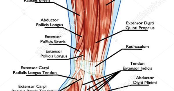 Anatomy of palm