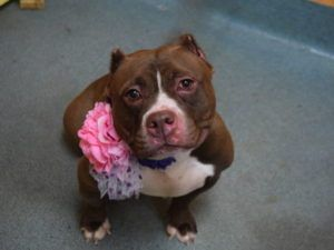 Coco A1086801 With Images Dogs Animal Shelter Animal Help