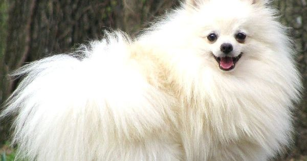 Dog - fine photo