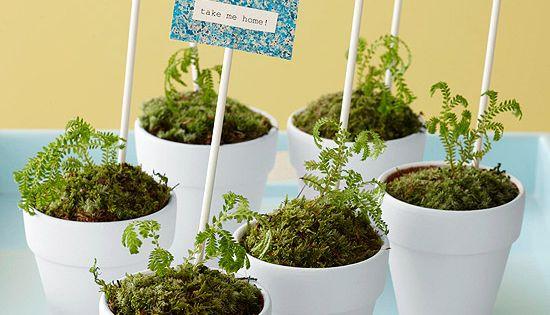 Plant Party Favors.