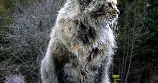 cat stevens live